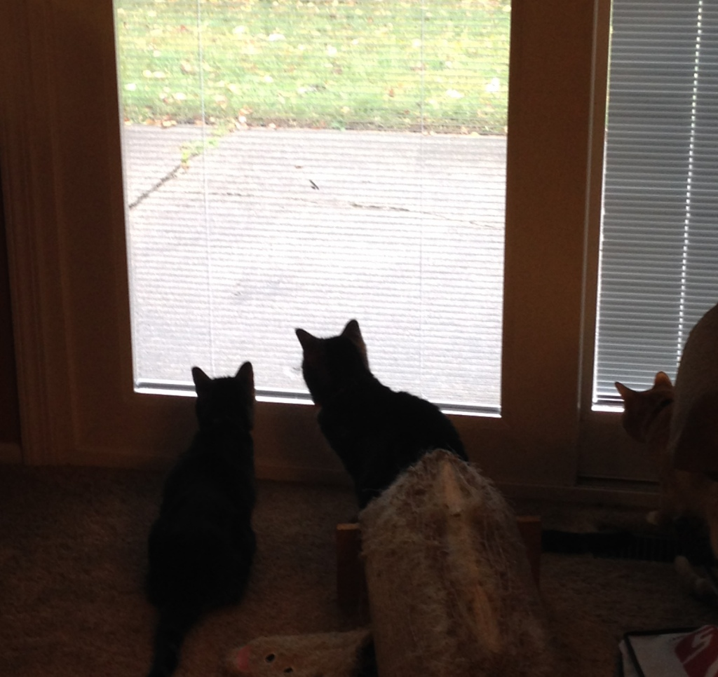 Even without smell-o-vision cat TV is especially interesting today.